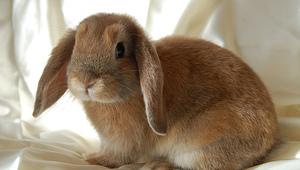 Jarní výstava králíků, holubů a drůbeže