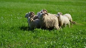 Den Země aneb Ratibořické ovčácké slavnosti